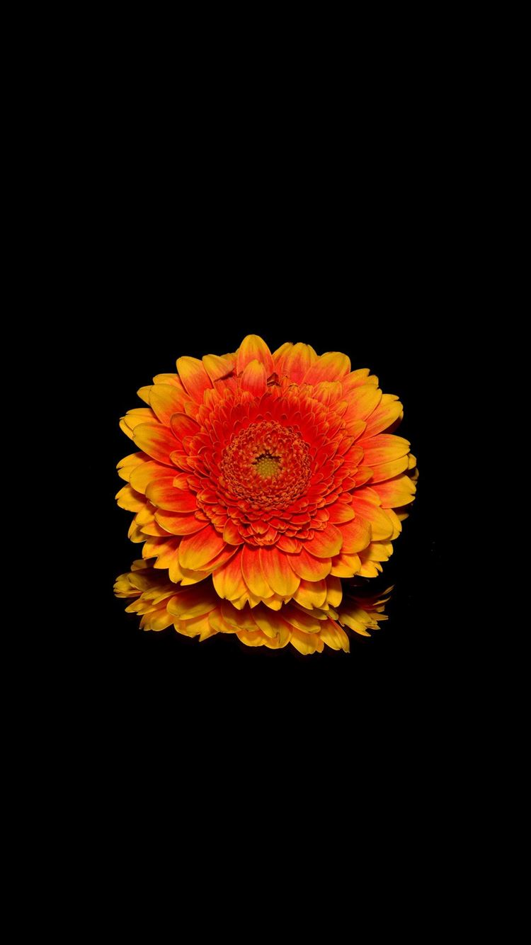 Flower Red Dark Iphone 8 Wallpapers Free Download
