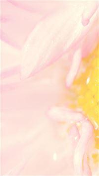 Natural Beautiful Pink Flower Petal Zoom iPhone 6 wallpaper