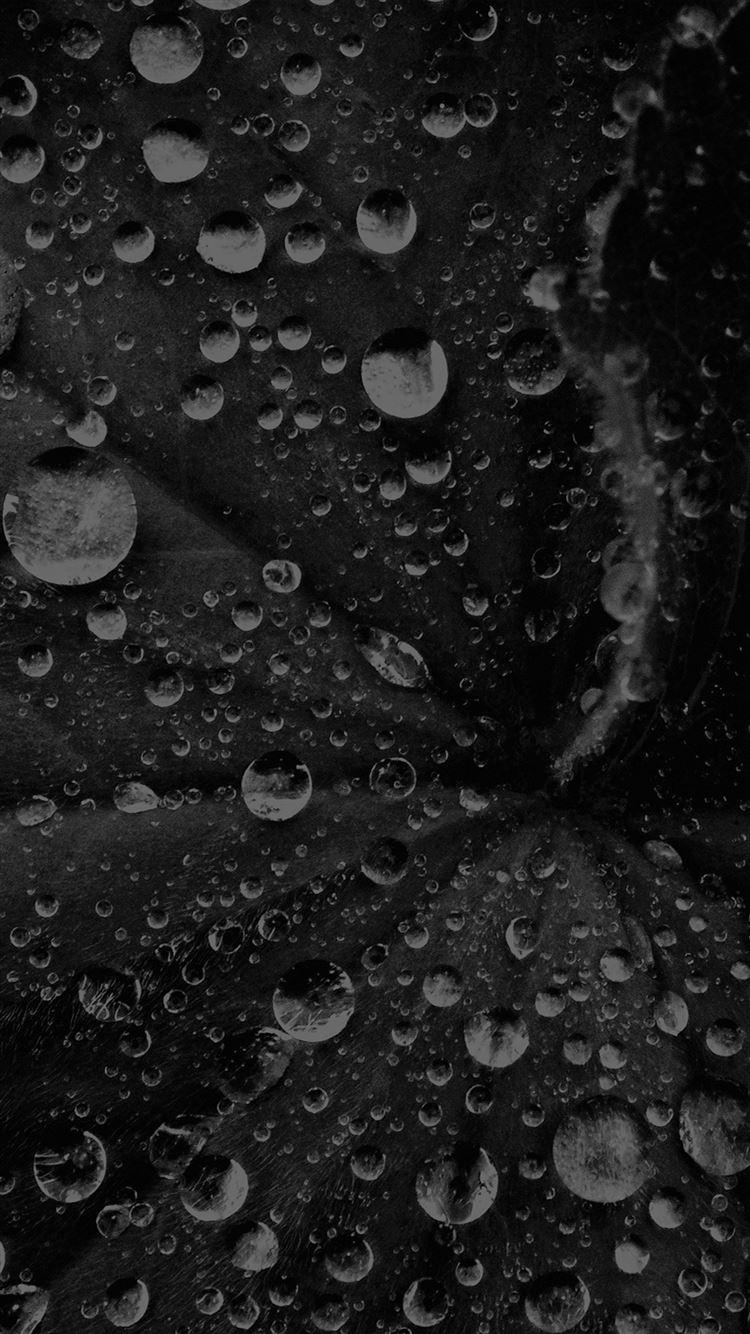 ... Water Drop On Leaf Summer Dark Bw Live Black iPhone 8 wallpaper.