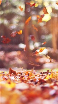 Fall Leaves Nature Tree Year Sad Flare iPhone 6(s)~8(s) wallpaper