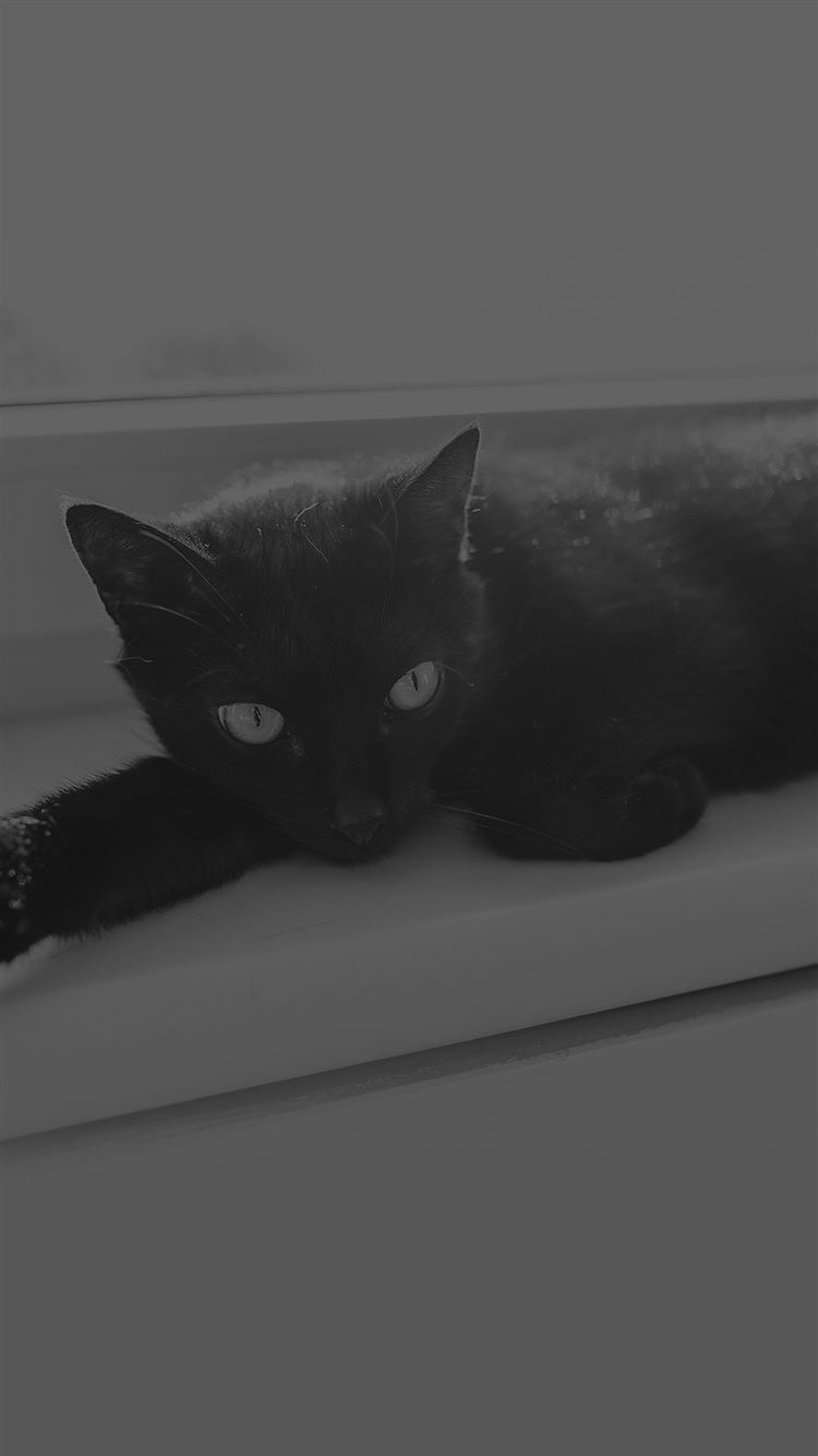 Black Cat Animal Cute Watching Dark Bw Iphone 8 Wallpapers Free