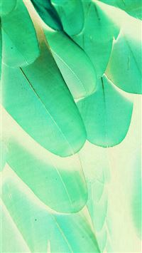 Feather Green Blue Nature Texture Animal Pattern iPhone 6(s)~8(s) wallpaper