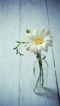 Aesthetic Beauty Daisy Vase iPhone 6(s)~8(s) wallpaper