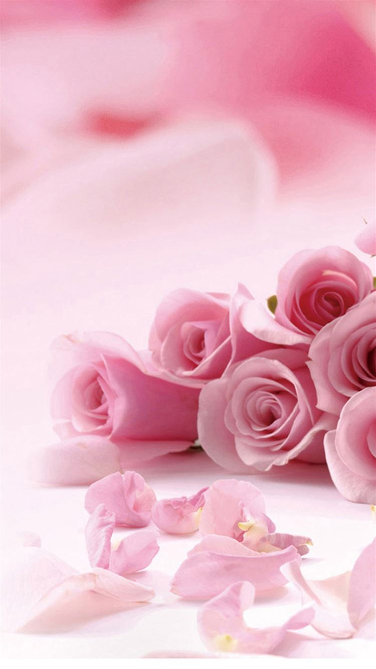 Pink Roses Flower Petals Iphone 8 Wallpapers Free Download