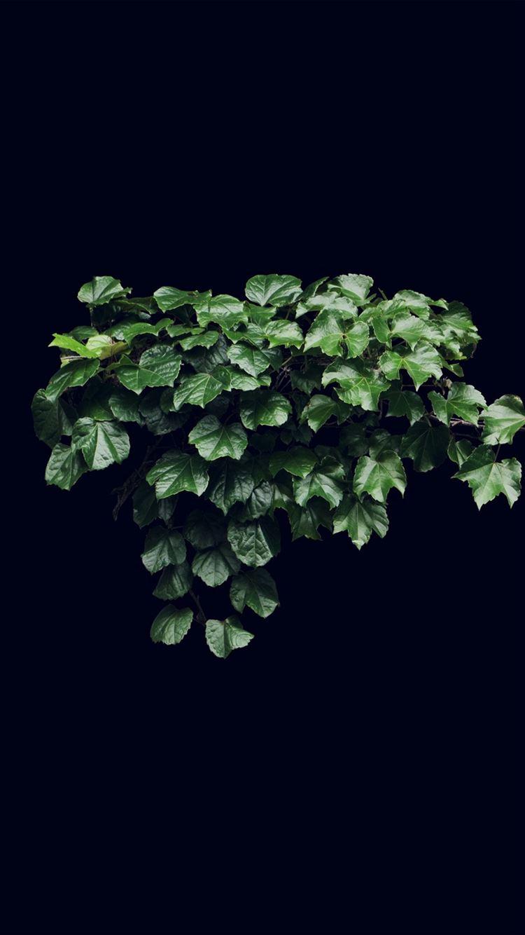 Truevine Dark Nature Green Flower Leaf Iphone 8 Wallpaper