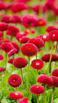 Flower Red Green Spring Bokeh Nature iPhone 6(s)~8(s) wallpaper