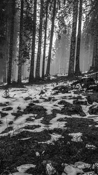 Mountain Snow Woods Nature Dark Bw iPhone 6 wallpaper