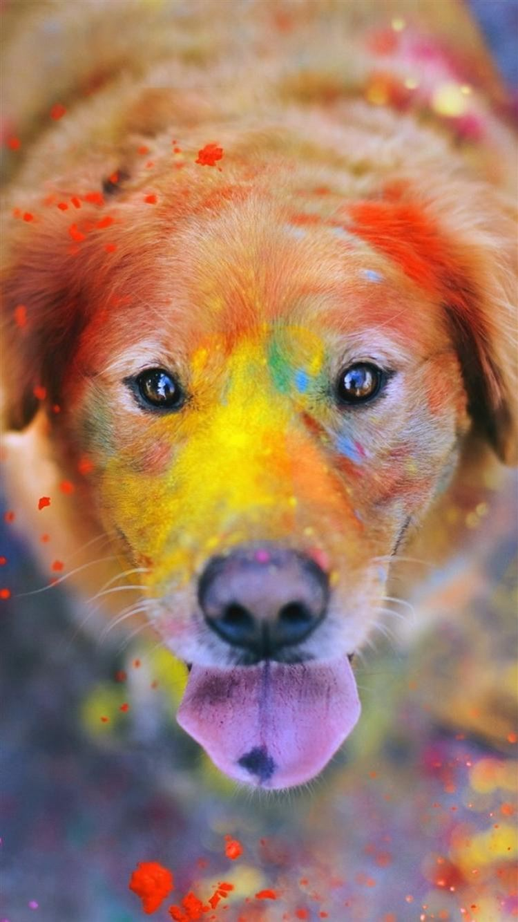 Colorful Paint Giant Dog Animal Iphone 8 Wallpapers Free