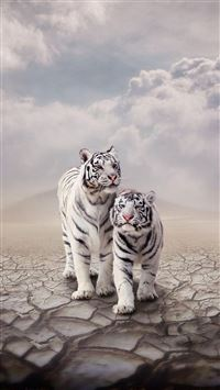 Drought Sandy Clouds White Tiger Cp iPhone 6(s)~8(s) wallpaper