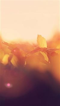 Morning Leaf Bud Sunshine Macro Flare iPhone wallpaper