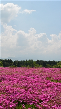 Field Flowers Pink Summer iPhone 6(s)~8(s) wallpaper