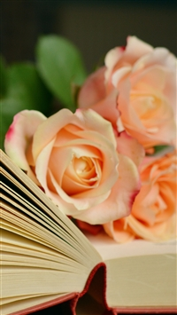 Book Roses Bouquet Reading iPhone 6 wallpaper
