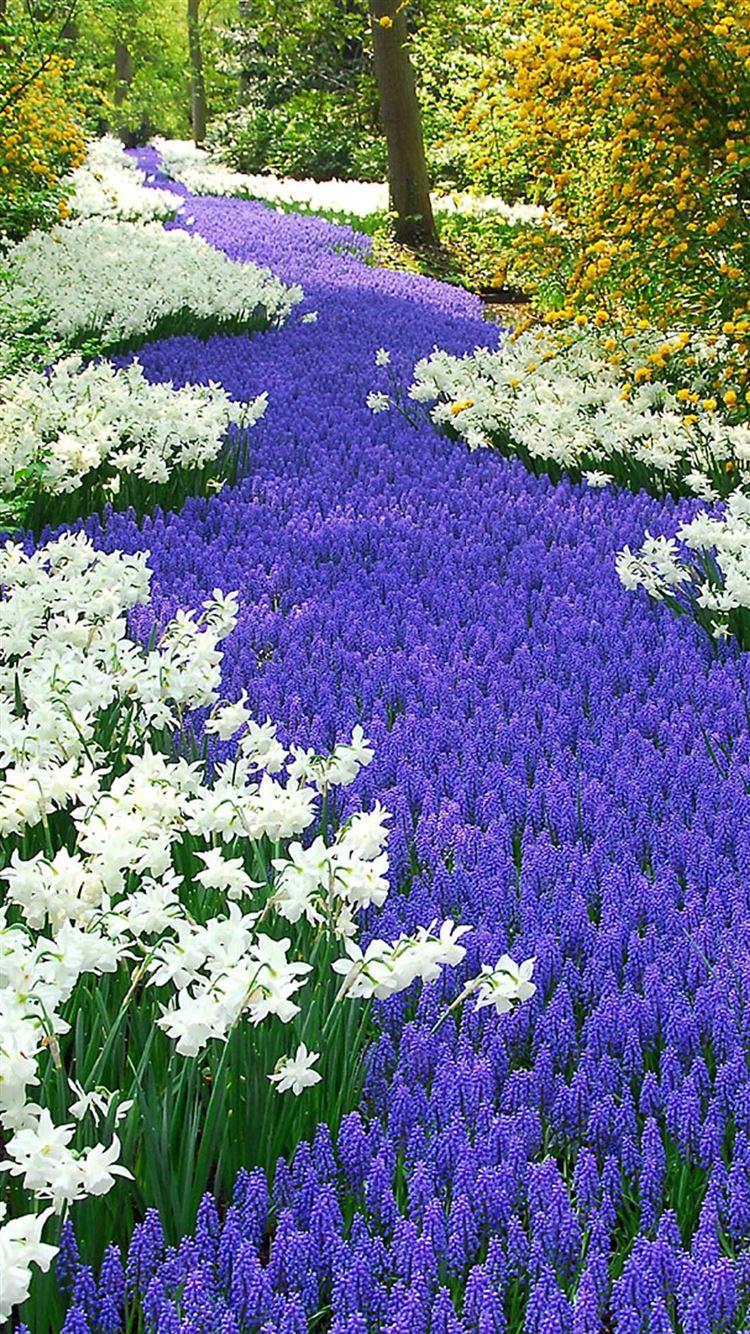 Best Garden Iphone 8 Wallpapers Hd Ilikewallpaper