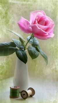 Elegant Pink Rose Vase Ikebana Art iPhone 6 wallpaper