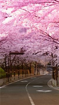Bright Cherry Blossom Road iPhone 6(s)~8(s) wallpaper