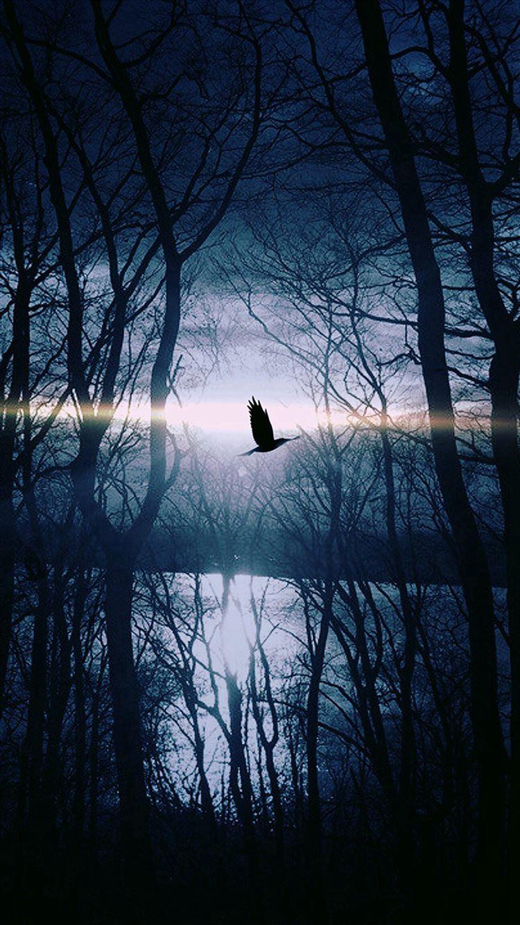 Wood Night Dark Nature Bird Fly Lake Iphone 8 Wallpapers Free Download