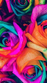Flower Rose Color Blue Rainbow Art Nature iPhone 6 wallpaper