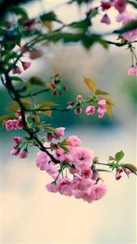 Nature Spring Plum Branch Bokeh Blur iPhone 6 wallpaper
