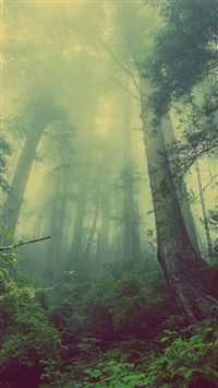 Green Forest Mist Fog iPhone 6(s)~8(s) wallpaper