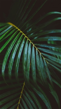 Palm Frond Leafy Branch iPhone 6(s)~8(s) wallpaper