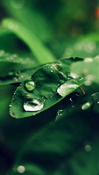 Leaf Rain Green Nature Forest Blue iPhone 6(s)~8(s) wallpaper