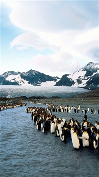 Penguins North Mountains Flock Colony iPhone 6(s)~8(s) wallpaper