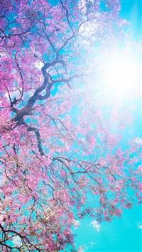 Tree Sun Blue Lilac Krone Spring Flowering From Below Light iPhone 7 wallpaper