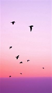 Birds Flying In Purple Sunset iPhone 6(s)~8(s) wallpaper