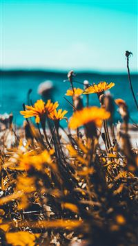 Flower Summer Spring Nature iPhone 6(s)~8(s) wallpaper