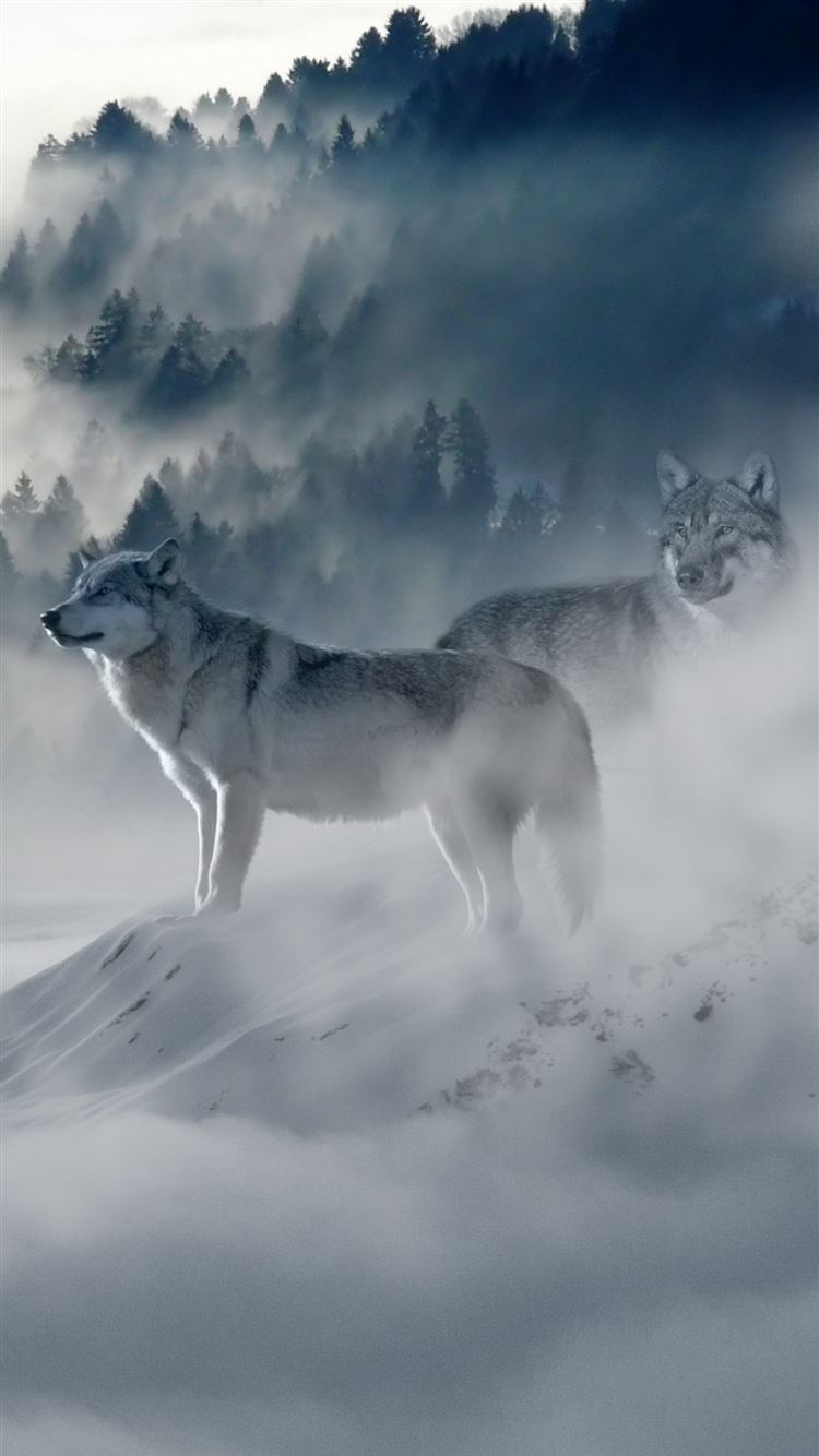 Wolf Wolves Predators Iphone 8 Wallpapers Free Download