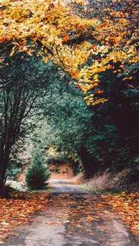 Elk River Campground  Port Orford  United States iPhone 6(s)~8(s) wallpaper