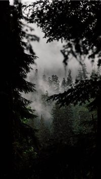 In the Quiet Woods iPhone 6(s)~8(s) wallpaper