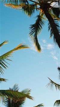 Kihei  United States iPhone 6(s)~8(s) wallpaper