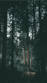 Yosemite wilderness iPhone 6(s)~8(s) wallpaper