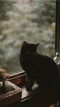 Best Black Cat Iphone 8 Wallpapers Hd Ilikewallpaper