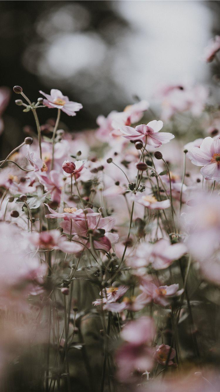 Pastel Pink Flowers Iphone 8 Wallpapers Free Download