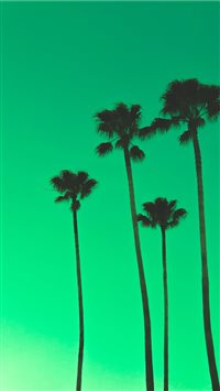 four palm trees iPhone 6(s)~8(s) wallpaper