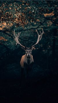 Your Majesty  the King of Teutoburg Forest! 🦌 iPhone 6(s)~8(s) wallpaper