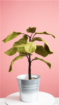 Ficus plant from Felt iPhone 6(s)~8(s) wallpaper