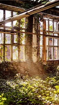 Overgrown room with windows iPhone 6(s)~8(s) wallpaper