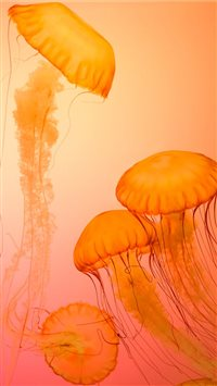 Jellyfish at Shedd Aquarium iPhone 6(s)~8(s) wallpaper