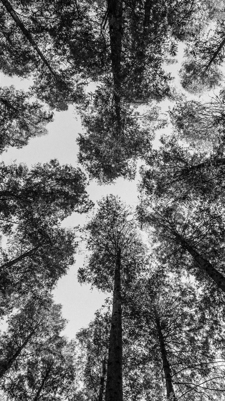 worm view photography of trees iPhone 8 wallpaper