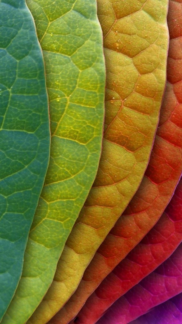 Colorful Leaves IPhone Se Wallpaper