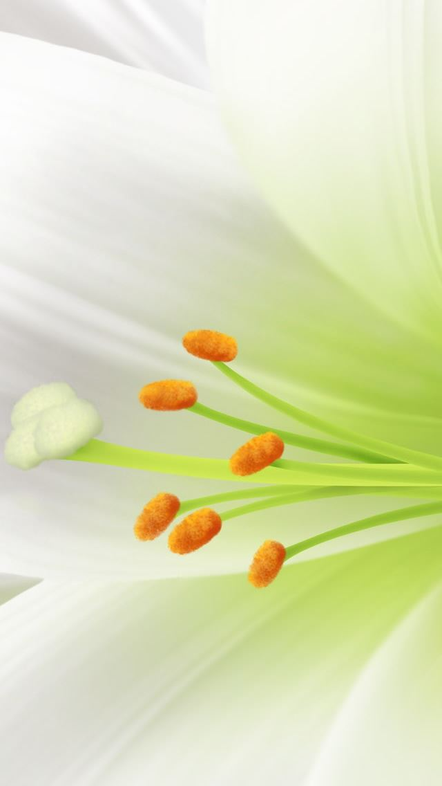 White Lily Easter Flower iPhone se wallpaper