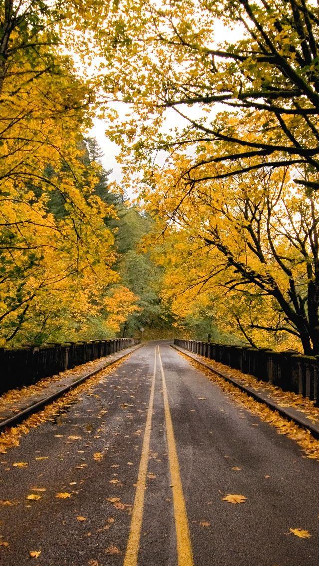 Autumn Road IPhone Se Wallpaper