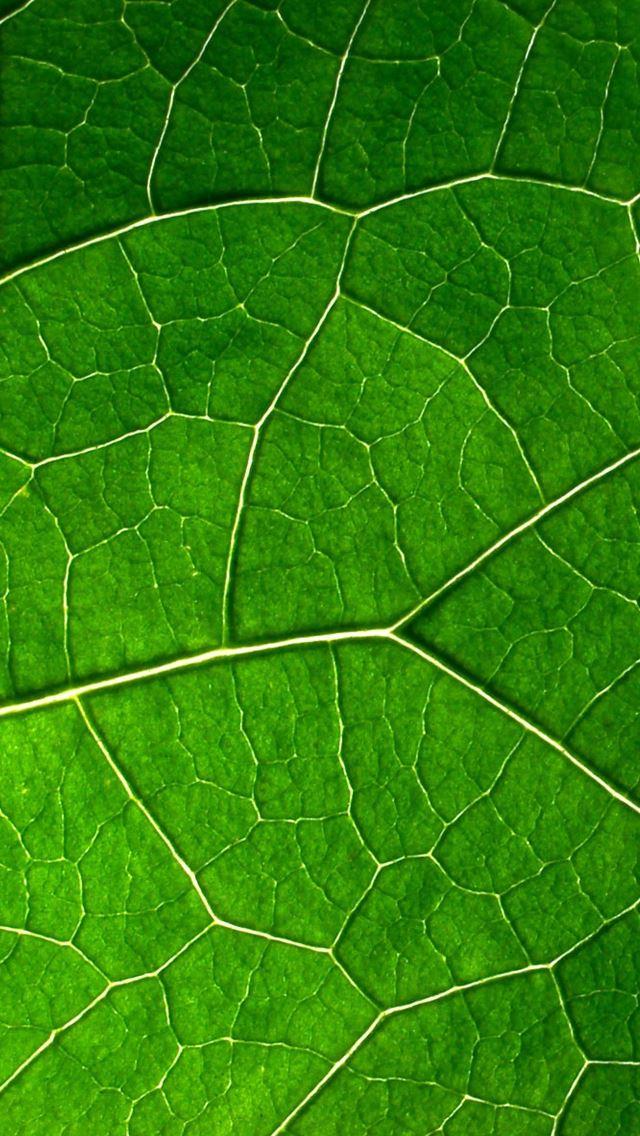 Leaf Vein IPhone Se Wallpaper