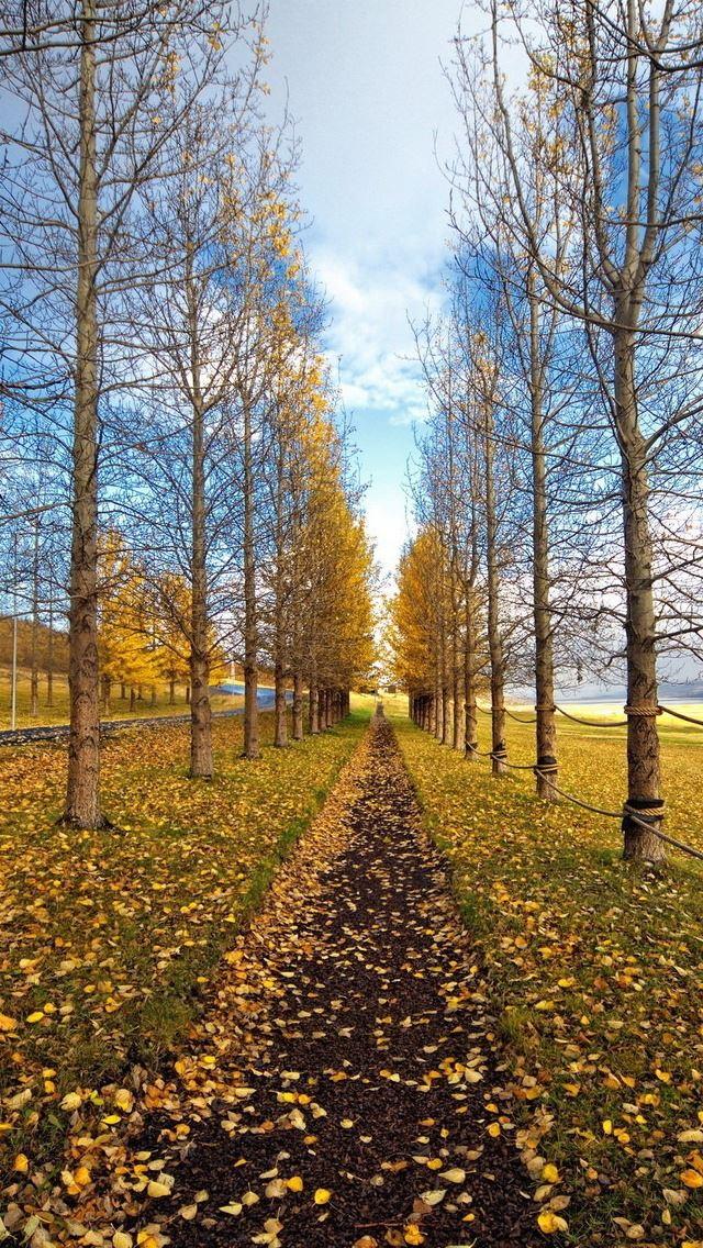 Wallpaper Sunshine Path Landscape K Nature