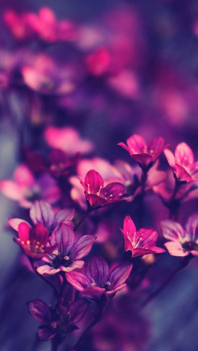 Purple Wildflowers Iphone Se Wallpaper Download Iphone Wallpapers