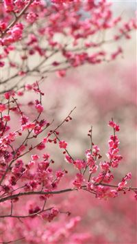 300 Best Of Spring Hd Wallpapers For Your Iphone 5 S C Se Page 1
