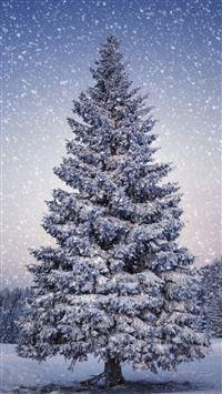 5092 65: Fir Trees Snowfall Winter IPhone 5(s/c)~se Wallpaper